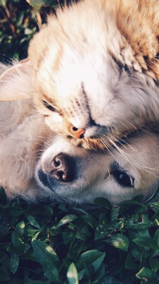 Cat and Dog Wallpaper in HD for iPhone 7