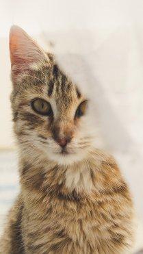 Cute Cat Wallpaper in HD for iPhone 7