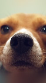 Dog Closeup Wallpaper in HD for iPhone 7