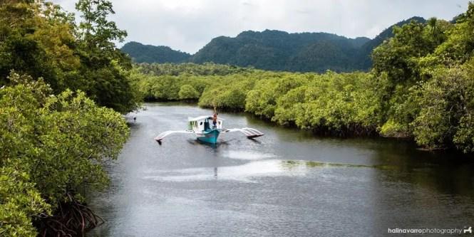 Mangrove forest in Del Carmen, Siargao