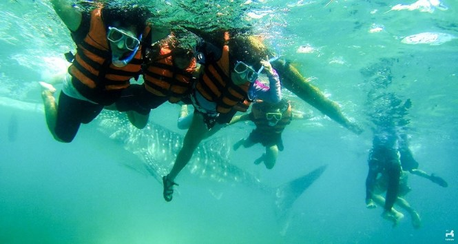 Swimming with whalesharks in Oslob, Cebu