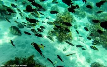 Snorkeling in Malcapuya Island, Coron