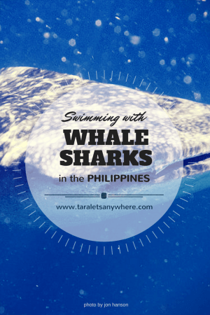 What you need to know about swimming with whale sharks in the Philippines. Learn why it's better to skip Oslob and head to Donsol instead.