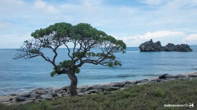 Tree in Target Island, Bulalacao