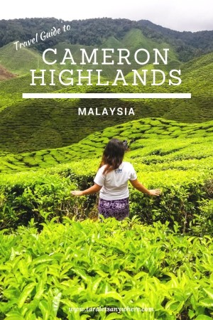 Travel guide to Cameron Highlands, Malaysia | best places to stay in Cameron Highlands | Cameron Highlands attractions