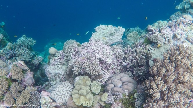 Coral shelf in Tomia Island, Wakatobi
