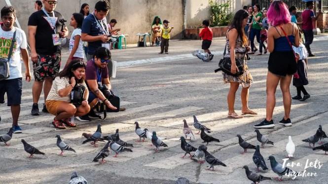 Bird feeding in Zamboanga City