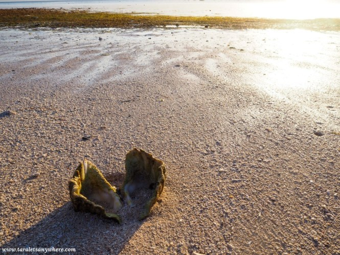 Seashell in a beach in Tomia Island, Wakatobi