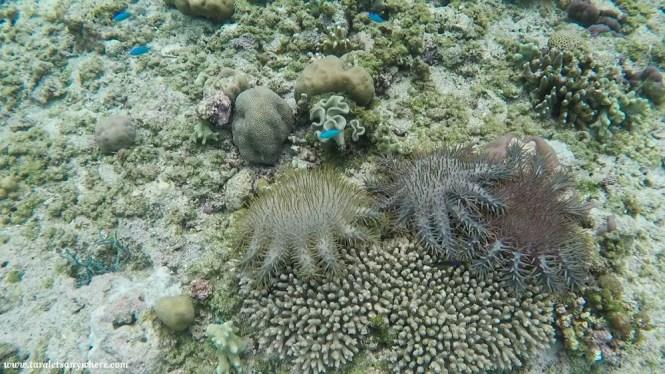 Snorkeling in Tomia Island, Wakatobi