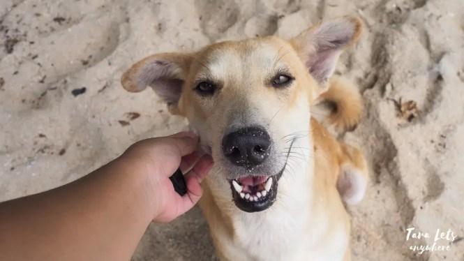 Dog in Bituin Cove
