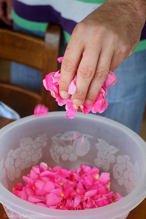 petale-de-trandafiri-1