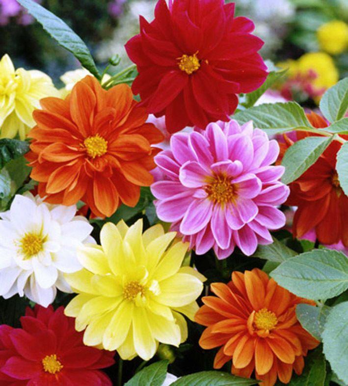 7 Flori Superbe Care Dau Grădinii Tale Un Aspect Fermecător