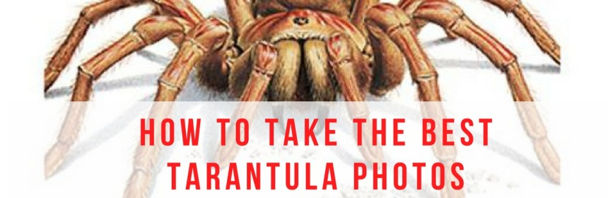 best tarantula pictures