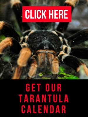 tarantula calendar