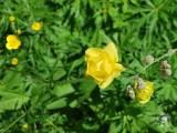 cvijet1