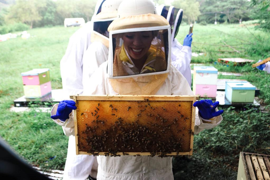 hawaiian beekeeping