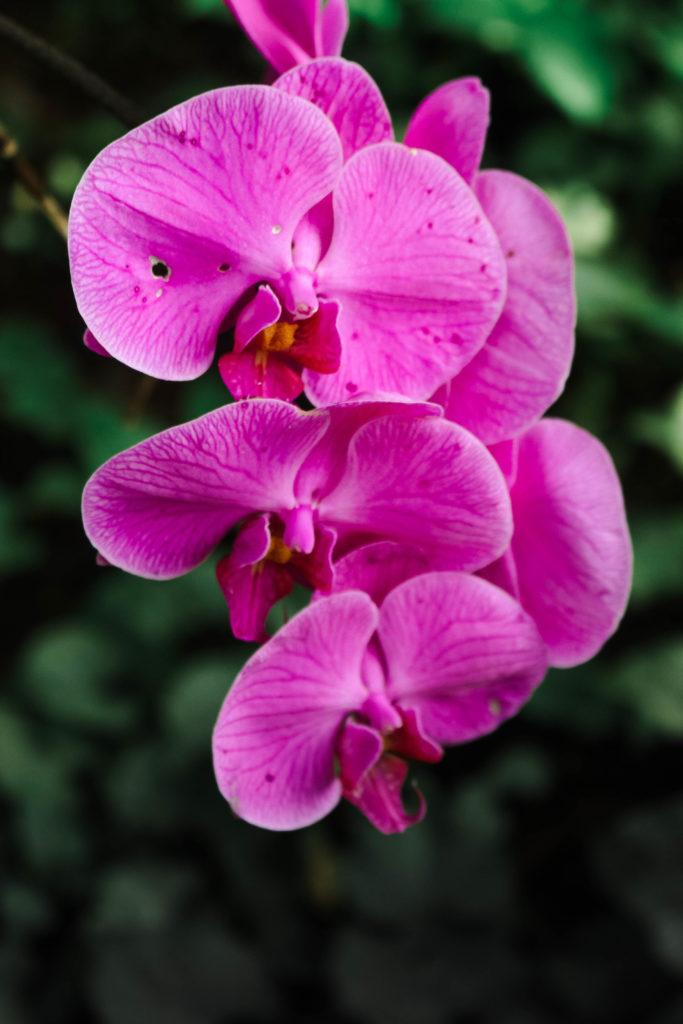 allerton botanical garden