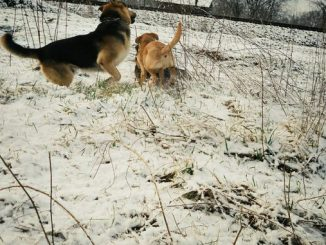 Neige sur Tarbes ce mercredi matin