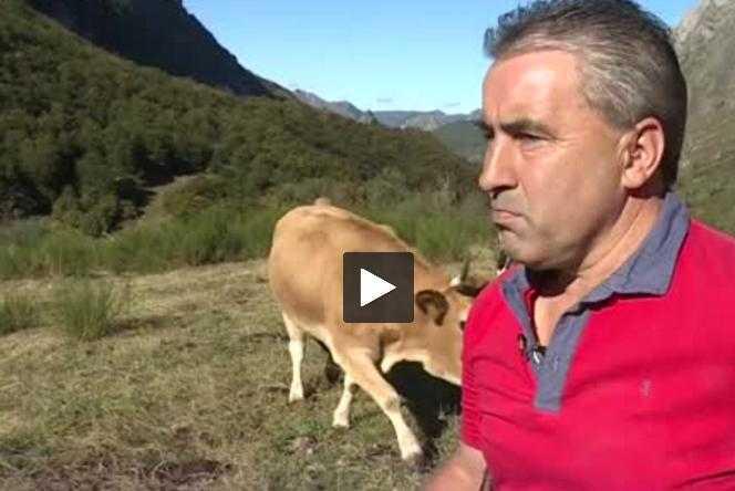 Pyrénées espagnoles : les ours attirent les touristes