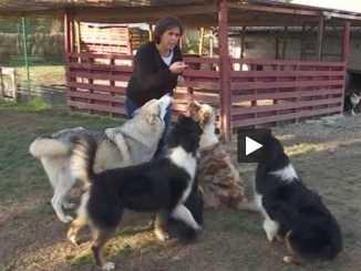 Hautes-Pyrénées : des chiens écouteurs pour les sourds et les malentendants