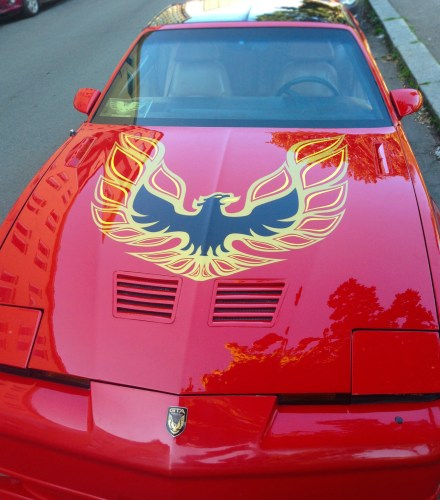 firebird_more