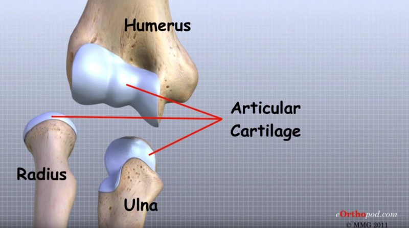 Video - Ellenbogen Anatomie (© MMG 2011 - Randale Sechrest)
