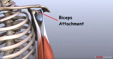 Video - Schulter Anatomie (© MMG 2011 - Randale Sechrest)