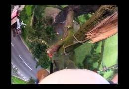 Pine tree limb failure