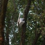 Inwazja kamer na Park Wiecha