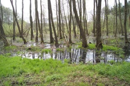 Las Bródnowski