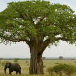 Baobab w Parku Bródnowskim – to pomysł z budżetu partycypacyjnego!