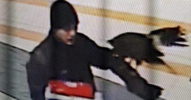 Kradzież roku: ktoś ukradł myszołowca! Który potem złodziejowi uciekł