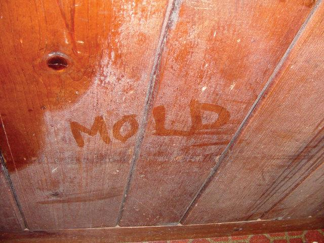 You may have mold in your crawl space if you suffer from allergies all year long.