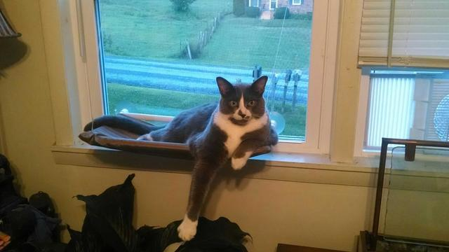 a cat hanging out on a window