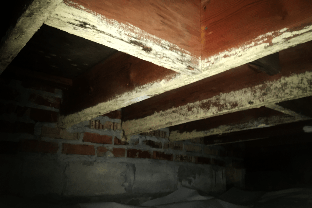 Mold on crawl space joists