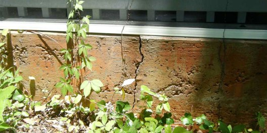 be careful planting near your home