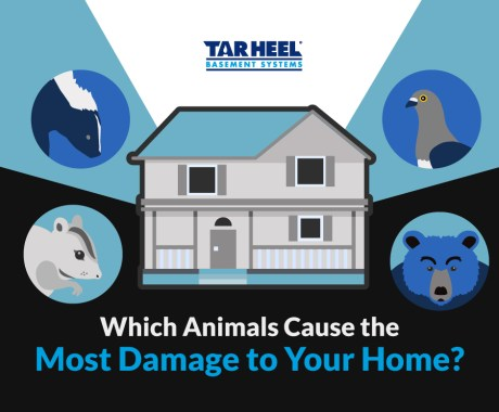 Home Damage and Animals To Watch For