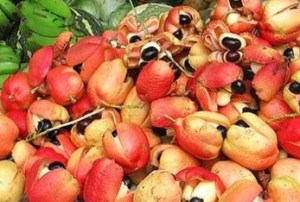 Ackee. These are indigenous to west Africa and were probably brought to Jamaica abord slave ships.