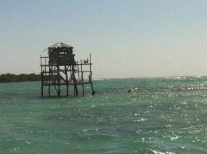 The pelican roost.  There awere a lot of them out that day.