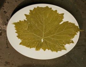 2. Lay the leaf flat with the vein (rough) side up facing you.