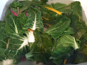 The trimmed greens, Rainbow Chard in this instance, in a (clean) sink full of cold water. It needs to be cold. If you want to refresh older greens, you can fill the sink with cold water and ice.