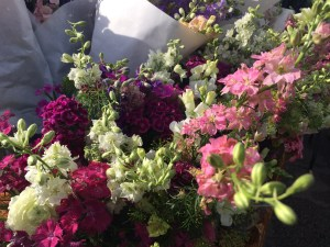 Cut flowers at Animal Farm Organic Market Garden