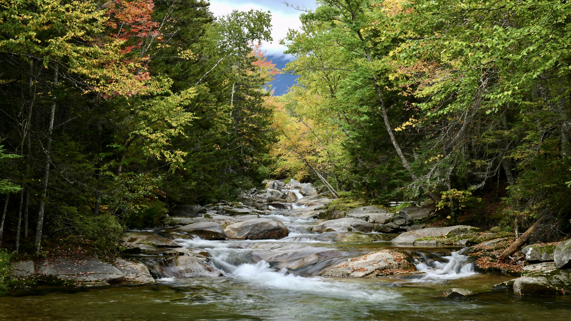 Scene of a river center and autumn colored trees lining it. 2021. Taryn Okesson. Digital Photography. White Mountain National Forest, New Hampshire.