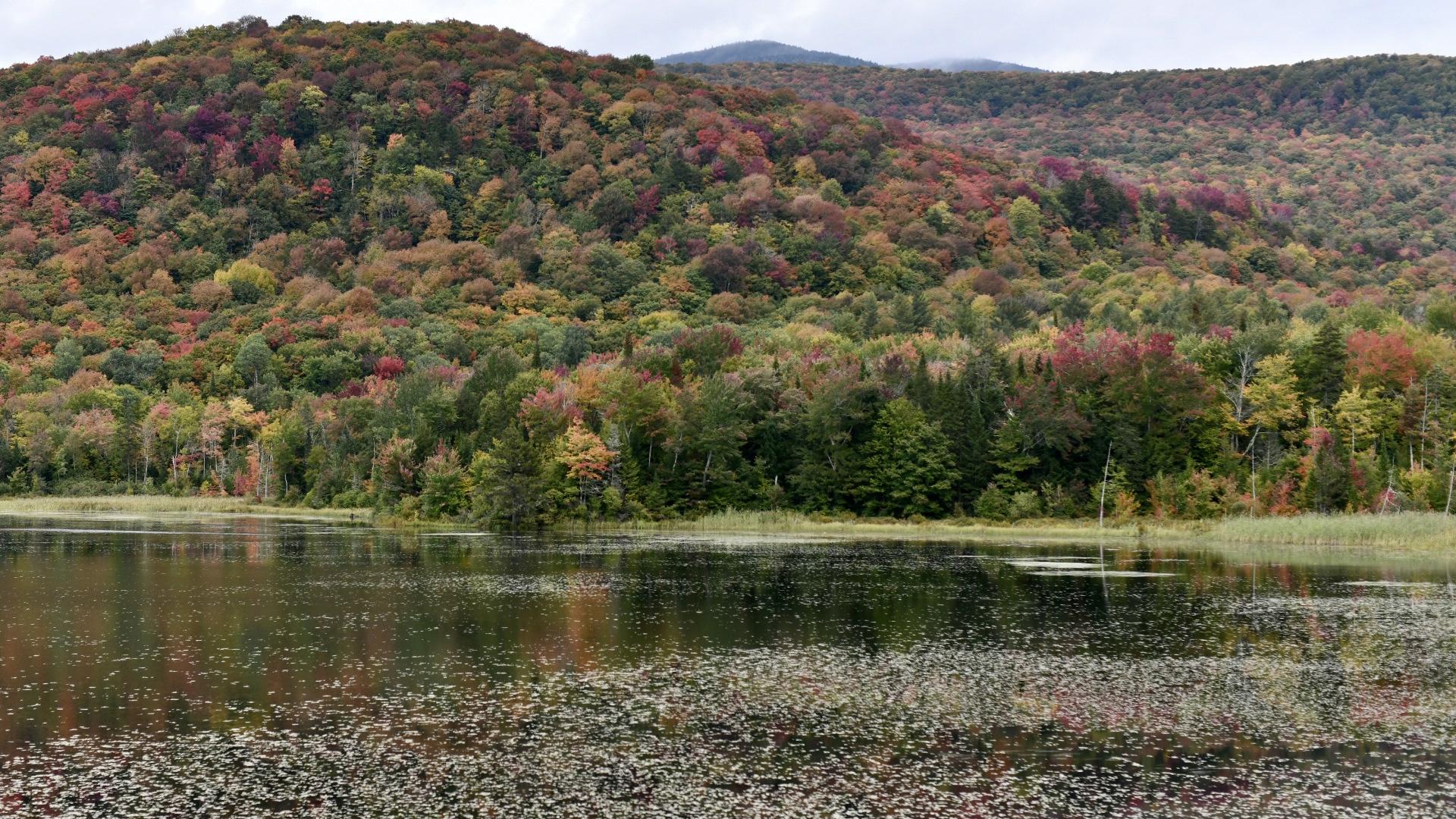 2021. Taryn Okesson. Digital Photography. Belvidere Pond , Vermont.
