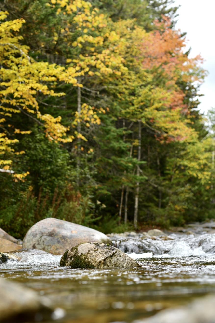 Photograph taken from low perspective of river. Rocks in focus. Trees in ground out of focus. 2021. Taryn Okesson. Digital Photography. White Mountain National Forest, New Hampshire.