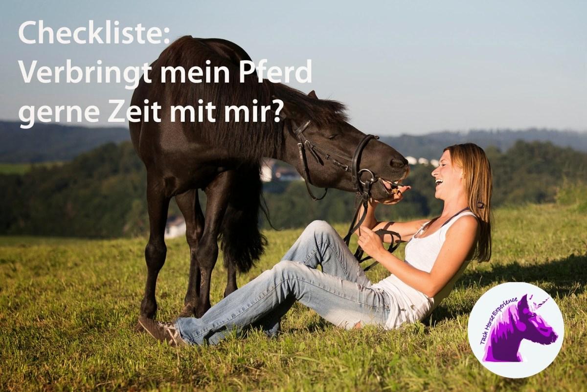 Checkliste - Verbringt mein Pferd gerne Zeit mit mir?