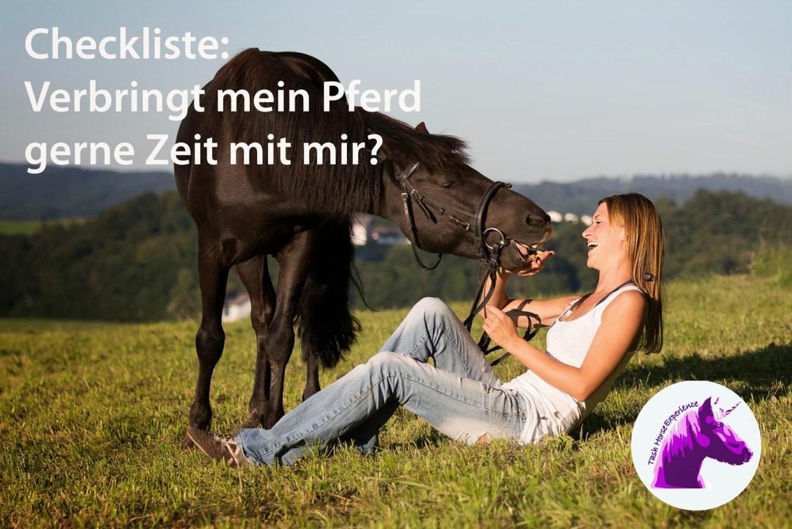 Verbringt mein Pferd gerne Zeit mit mir?