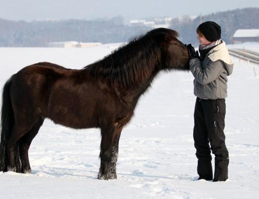 Weihnachtsgeschichte am Ponyhof