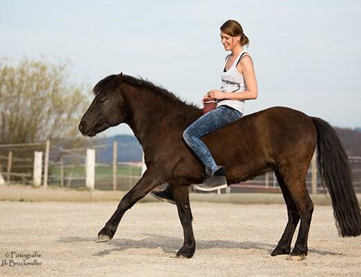 Vertrauen Pferdetraining