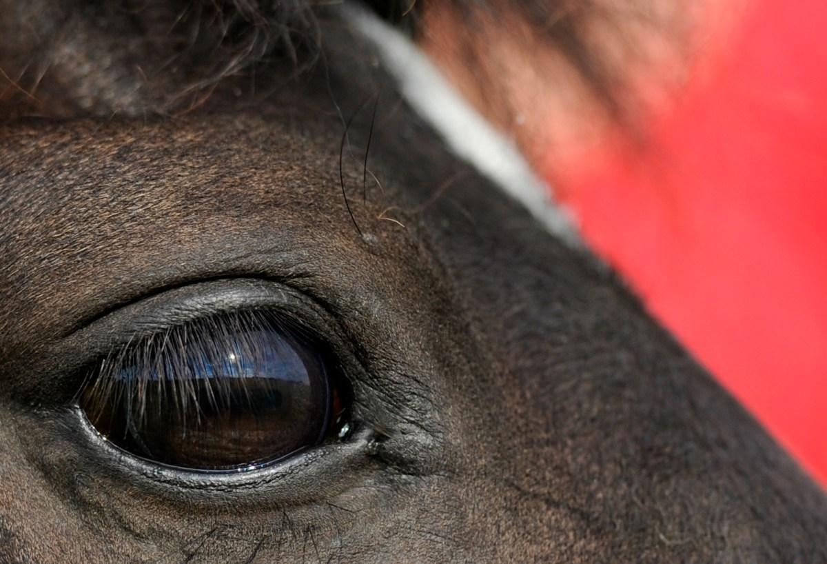 Wie Farben auf unsere Pferde wirken - ROT
